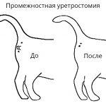 промежностная уретростомия кошка схема
