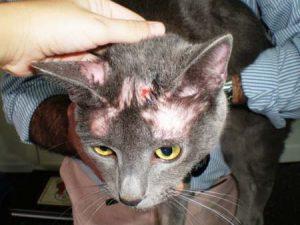 симптомы болезни кошек