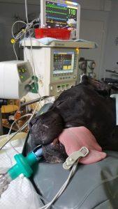 газовая анестезия
