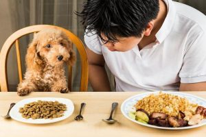 еда у собак
