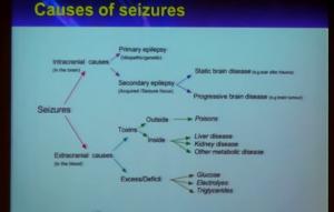 эпилепсия развитие судорог