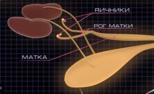 овариоэктомия