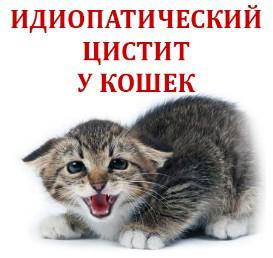Идиопатический цистит у котов