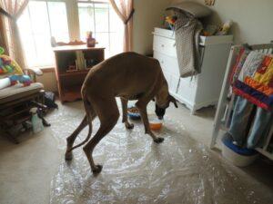 синдром воблера собак