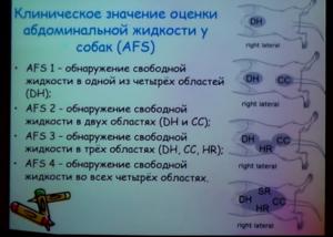 узи в анестезиологии