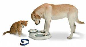 вес у животных
