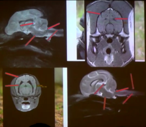 череп и мозг