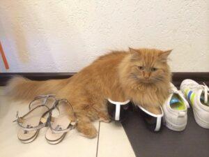 кот и тапки