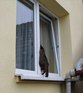 окно и кошка