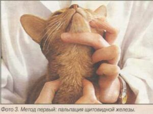 гипертиреоидоз