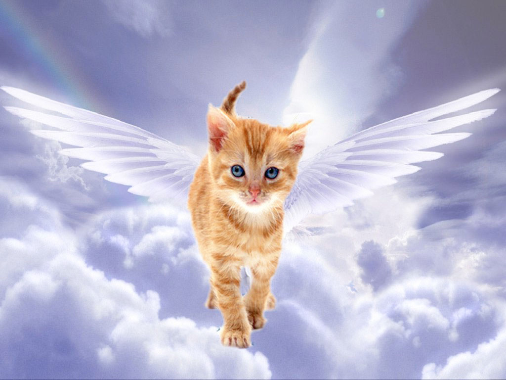 Как понять что кот умирает признаки