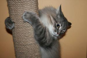 приучить кошку к когтеточке