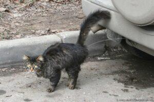 кастрированный кот метит
