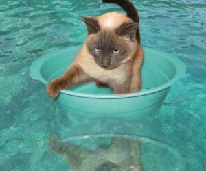 купать кошку